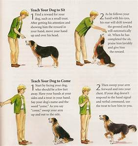 basic obedience training techniques for your dog With how to properly train a dog