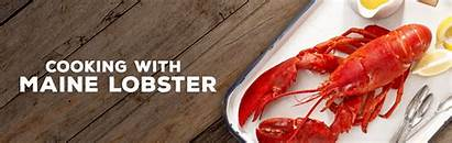 Lobster Maine Delicious Cooking Tricks Recipes Gourmet