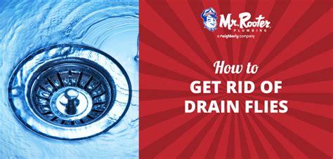 rid  drain flies
