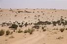 A journey across the Sahel region of Chad – World Food ...