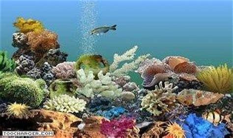 fond d ecran aquarium anime gratuit ecran de veille anime gratuit pour pc t 233 l 233 charger gratuitement