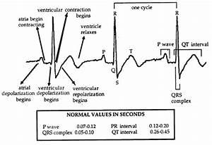Lab 8  Vertebrate Circulation And Respiration