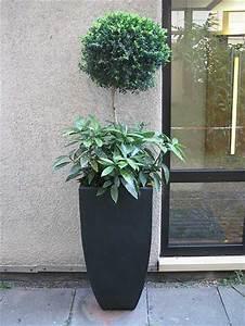 Große Pflanzkübel Für Draußen : es muss passen die richtigen pflanzk bel f r gro e pflanzen und b umchen fragen bilder ~ Sanjose-hotels-ca.com Haus und Dekorationen