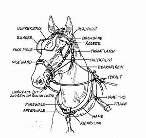 Horse Harness Parts Gallery