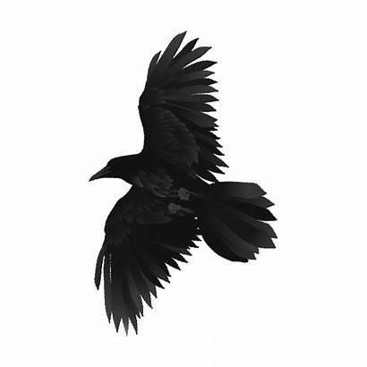 Sticker Raven Giphy Titans Netflix Bird Tweet
