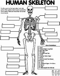 Human Skeleton Coloring Page