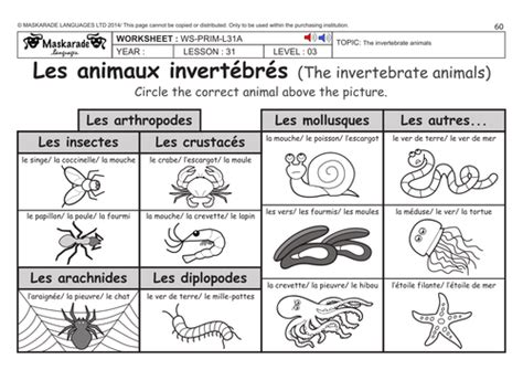 ks2 level 3 ks3 year 7 vertebrate and