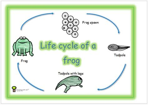 life cycle   frog great resources  learning