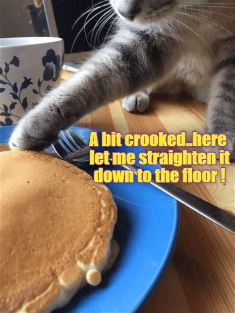 funny pancakes animal eat cheezburger deathtoboredom animals dump