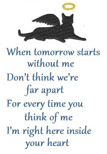 loss of a cat quotes pet loss poem and miss you on