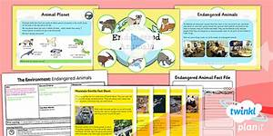 Science: The Environment: Endangered Animals Year 2 Lesson ...