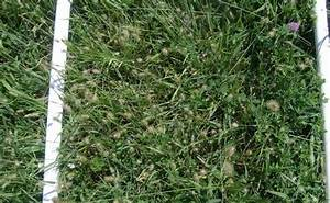 Grazing Summer Grasses  What To Expect  U2013 The Horse