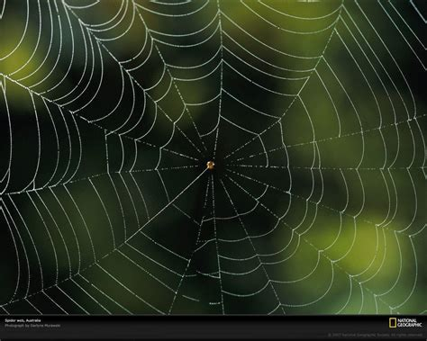 Background Spider Web by Spider Web Backgrounds Wallpaper Cave