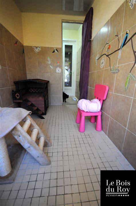 chambre avec 77 chambre avec préau pension pour chats le bois du roy