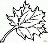 Oak Leaf Printable Patterns Eastern Coloring Pages sketch template