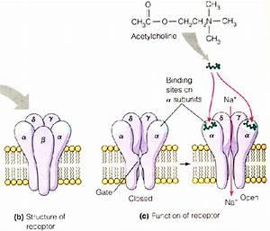 Bio Geo Nerd  Neurons