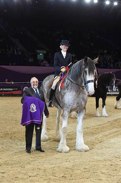 Clydesdale Danny Boy Horse Ridden Heavies Leads