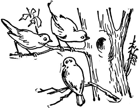 Tree With Birds Clipart Black And White & Clip Art Images ...