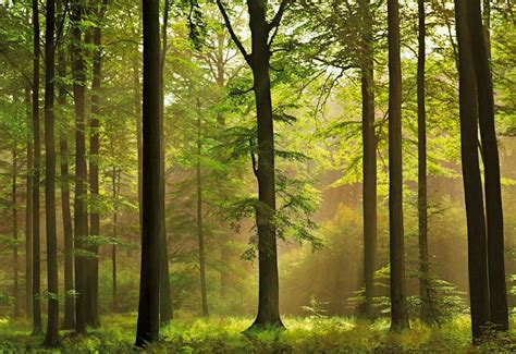 pretty forest abstract wallpaper beautiful forest wallpapers