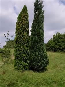 Bäume Für Den Vorgarten : welche b ume eignen sich f r den vorgarten ~ Michelbontemps.com Haus und Dekorationen