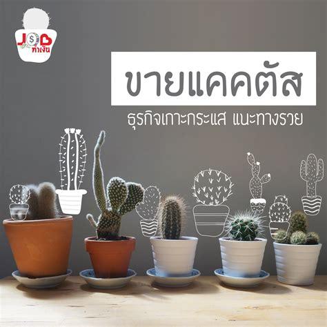 JOB ทำเงิน - ขายแคคตัส ธุรกิจเกาะกระแส แนะทางรวย - jobbkk.com