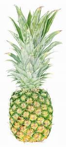 Pineapple Botanical Print from original watercolor ...