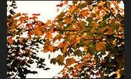 Schöne Herbstbilder Kostenlos : herbstbilder kostenlos und lizenzfrei ~ A.2002-acura-tl-radio.info Haus und Dekorationen