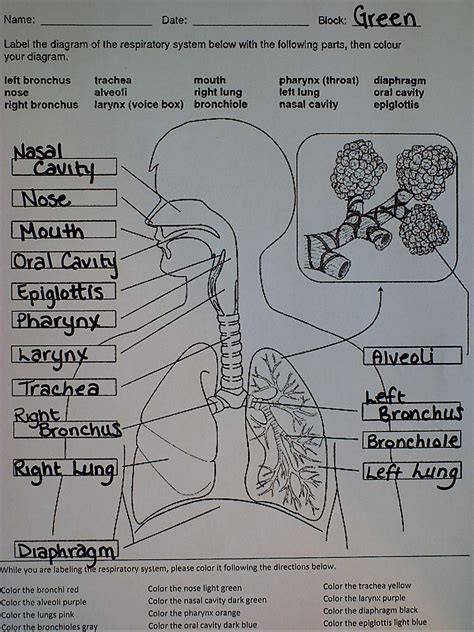 respiratory system ms palmer s science class