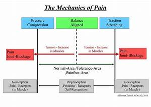 Back Pain Solutions Theory