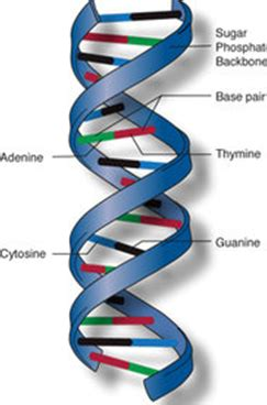 dna full form what is the full form of dna quora