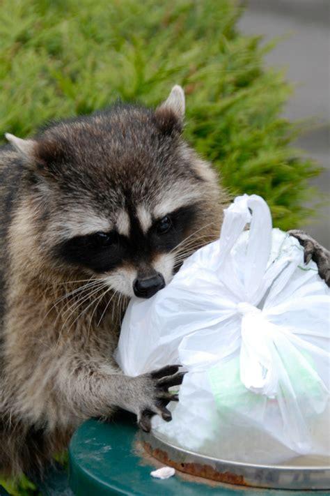 wild animals  chores