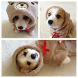 Memes Funny Animal Wearing Costumes