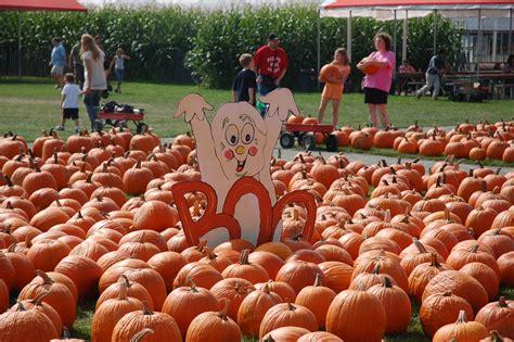 100 pumpkin picking machine cotton harvesting