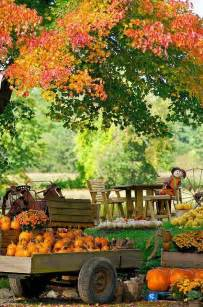 how to rustic thanksgiving style guide pumpkins thanksgiving and pumpkin farm