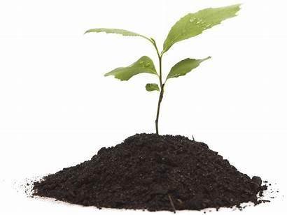 Soil Grow Plant Transparent Background Growing Clipart