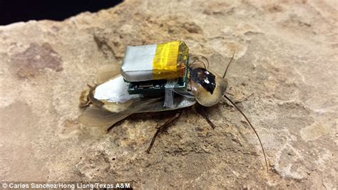 The Cyborg Cockroaches That Are Fitted With A Mind-control