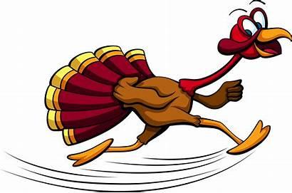 Turkey Running Thanksgiving Trot Gain Weight Run