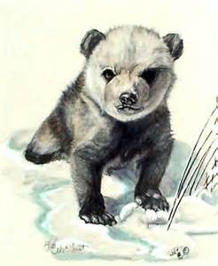 Grizzly Bear Cub Pencil Drawings