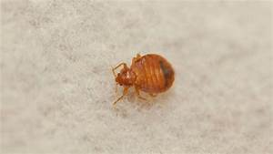 Bed bug rankings san diego thankfully way down the list for Bed bugs san francisco