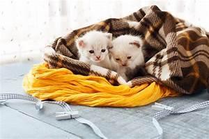 Große Koreatanne Kaufen : eine katze kaufen gro e entscheidung mit vielen folgen ~ Lizthompson.info Haus und Dekorationen