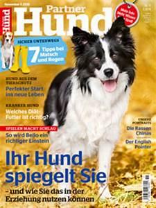 Partner Hund Abo Kündigen : katzen allein lassen geliebte katze magazin ~ Lizthompson.info Haus und Dekorationen