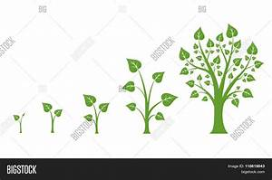 Tree Growth Vector Diagram Vector  U0026 Photo