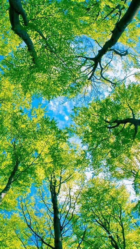 green trees wallpaper hd wallpaper nature