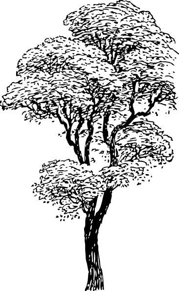 tall tree clip art  clkercom vector clip art