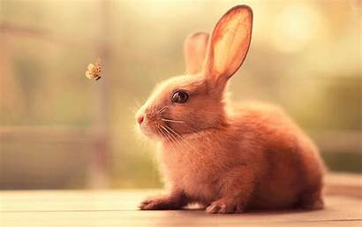 Bunny Wallpapers Animals 4k Backgrounds 1295