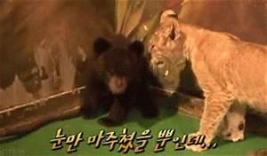 Surprised Baby Bear | Amazing Creatures