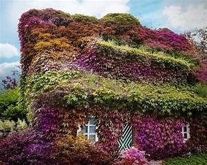 Rankpflanzen Winterhart Immergrün : ranken fotos bilder auf fotocommunity ~ A.2002-acura-tl-radio.info Haus und Dekorationen