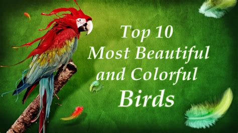 Top 10 Most Beautiful And Colorful Birds  Top Rated