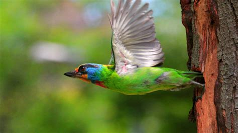 Download Wallpaper 1920x1080 birds, flying, colorful ...