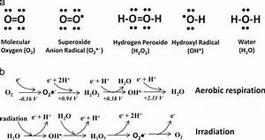 Reduction Of O2 To H2o And Its Free Radical Intermediates  A  Lewis